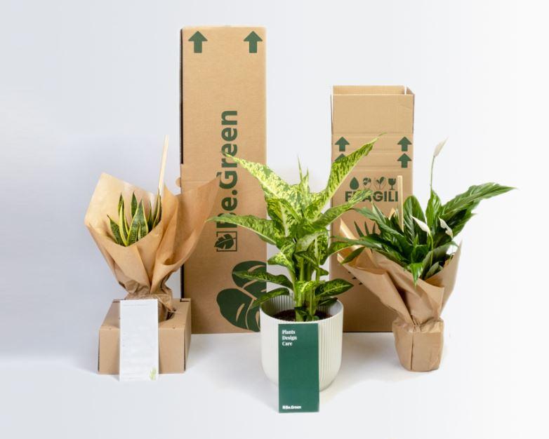 CP| Be.green : notre plante idéale livrée à domicile