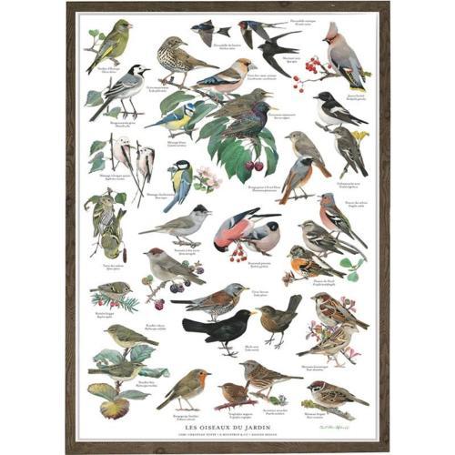 Poster Oiseaux